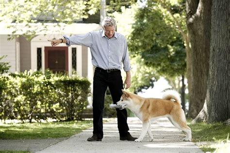 akita americano alimentazione akita inu cani taglia grande scopri la razza akita inu