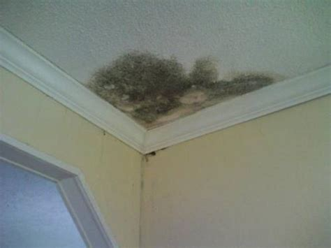 mold in ceiling mold esi green