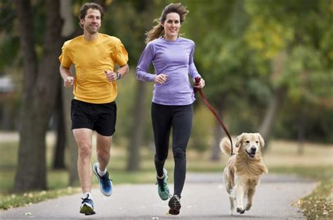 best dogs to run with the 15 best breeds for running livestrong