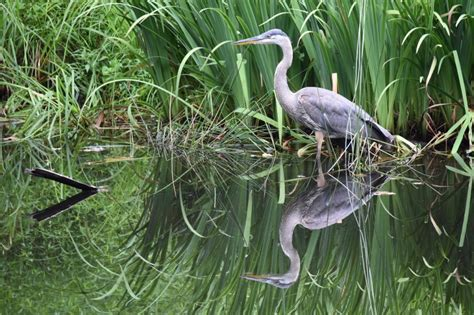 everglades boat tours fort lauderdale top airboat tours in the everglades fort lauderdale