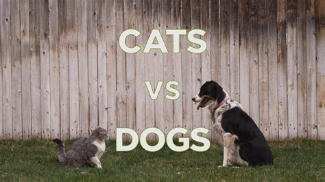 kittens vs puppies cats vs dogs with cats