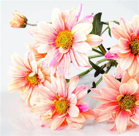 imagenes flores extraordinarias 9 fotograf 237 as gratis de flores color rosa fucsia y lila