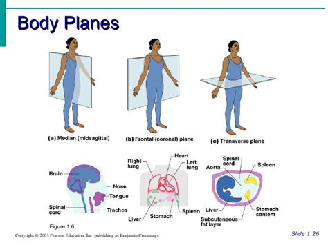 body orientation direction planes and sections 1000 images about medical terminology on pinterest