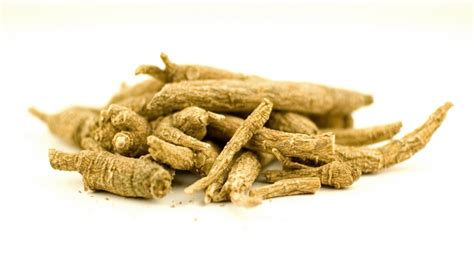 Panax Ginseng the active ingredient of panax ginseng panax ginseng