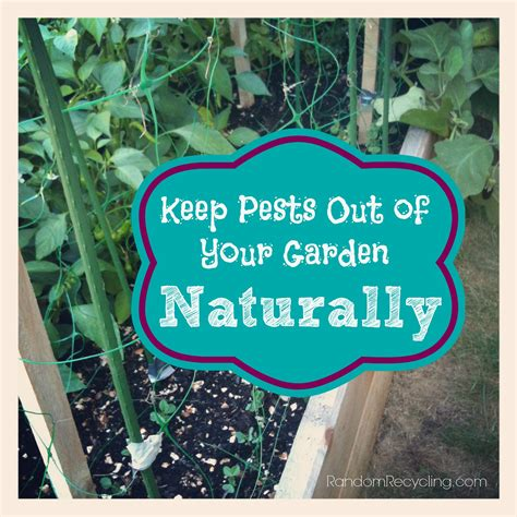 Gardening Naturally Keep Pests Out Of Your Garden Naturally
