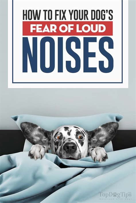 noises dogs how to fix your s noise phobia and fear of loud noises