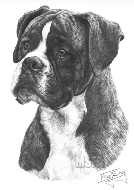 BOXER fine art dog print by Mike Sibley