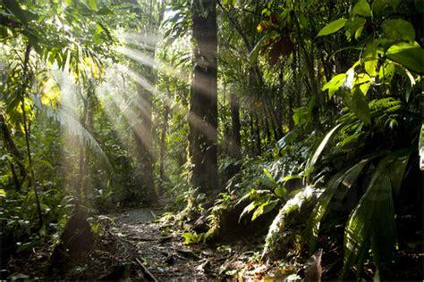 jungle light schickert jungle light poster posterlounge