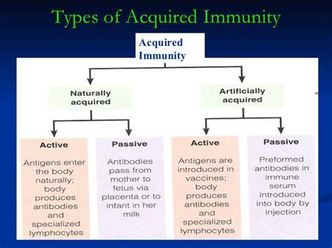 innate immunity a question of balance humoral immunity diagram tumor diagram elsavadorla