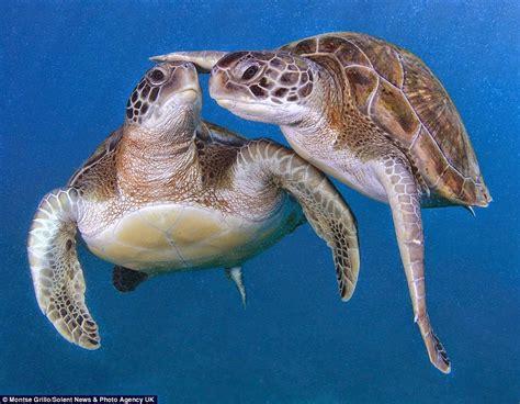 imagenes tiernas de tortugas magnificas im 225 genes de tortugas marinas muy curiosas y