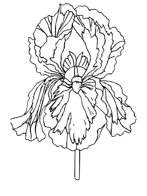 coloring pages of iris flowers iris flower coloring pages download and print iris flower