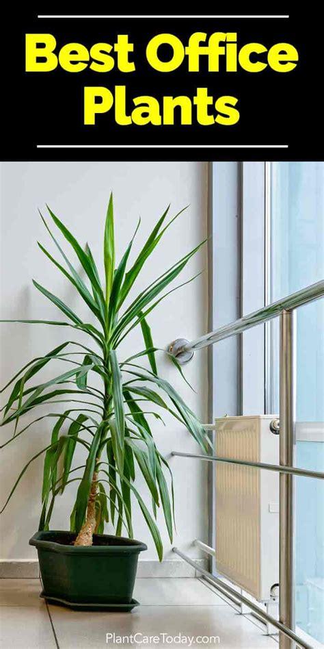 indoor plants   office