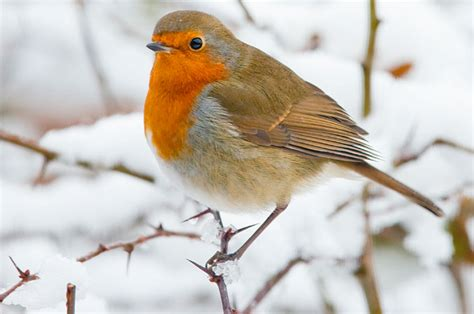 feeding wild birds in winter a checklist wilkolife