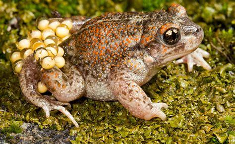 imagenes de animales oviparos viviparos y ovoviviparos animales ovoviv 237 paros informacion sobre animales