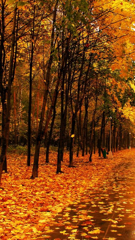 autumn wallpaper hd android yellow forest autumn best hd wallpapers for iphone and