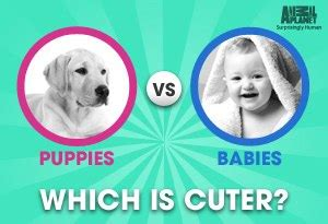 puppies vs babies puppies or babies which one s are cuter addictedtosaving