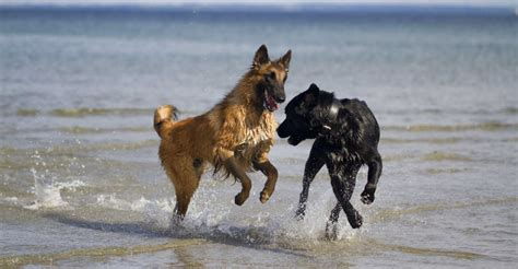 when should puppies start water whistles should you buy which is best how to