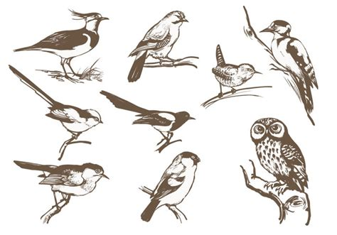 etched bird brush pack free photoshop brushes at brusheezy