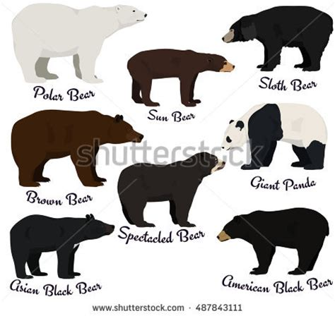 breeds species species stock images royalty free images vectors