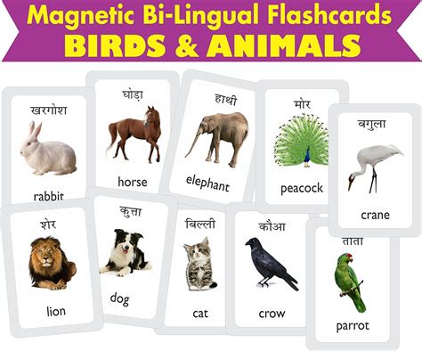 new year animal names animals name list with picture www pixshark