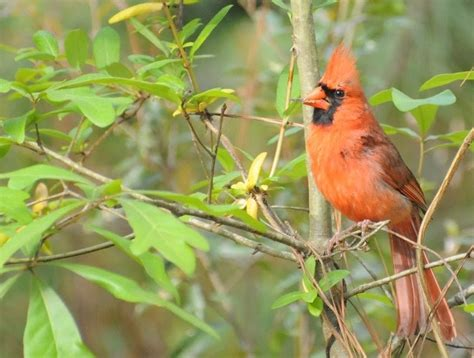 audubon south carolina great backyard bird count