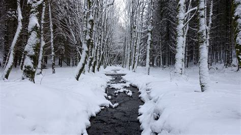 imagenes invierno hd fondo de pantalla de bosque nieve helado 193 rboles agua