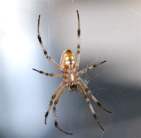 Garden Spider Legs Weekend Science Insects And Their Relatives Part 1