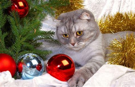 sweet cat cats animals background wallpapers  desktop nexus image