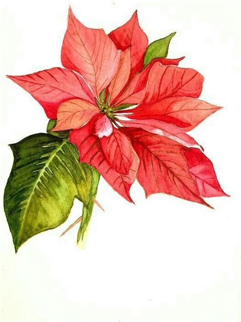 poinsettia tattoo 8 best flores de navidad images on painting on