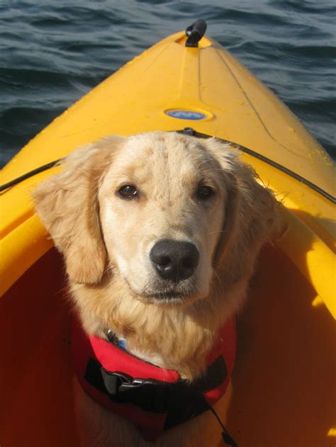 best kayak for dogs 1000 images about dogs kayaking on puppys dogs and perception
