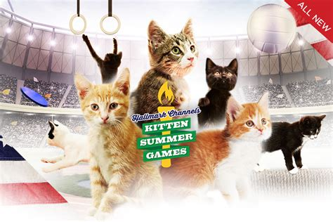 North Shore Animal League America Sweepstakes - kittencam kitten summer games hallmark channel