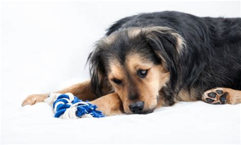 how to help a s upset stomach how to help a with an upset stomach the dogington post