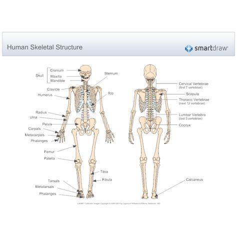 human skeletal system diagram human skeletal system diagram
