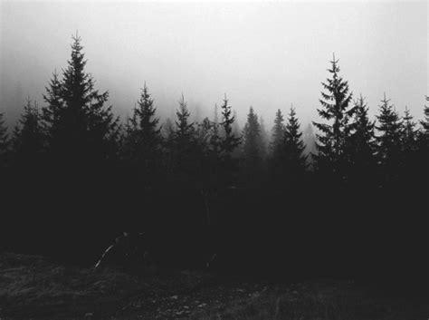 tumblr themes photography black and white wild joys wilder sins