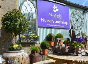 mayfield lavender nursery gift shop mayfield lavender