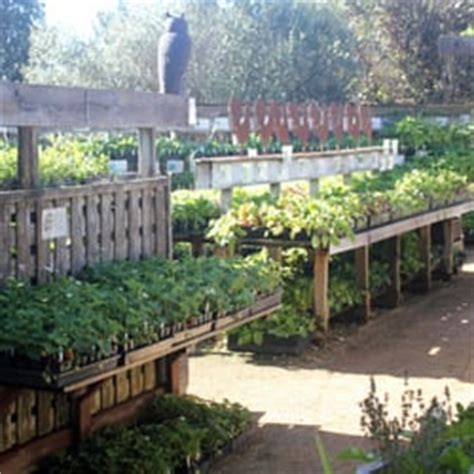 cottage gardens of petaluma cottage gardens of petaluma nurseries gardening