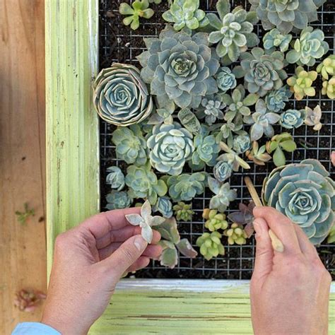 make a living succulent picture gardens succulent frame and succulent wall