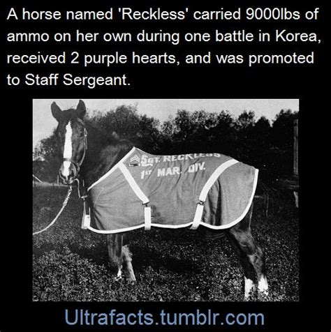 Sgt Stubby Facts 74 Best Tv Shows Horses In History Images On