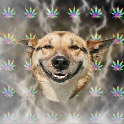 Stoned Dog Meme - stoner dog know your meme