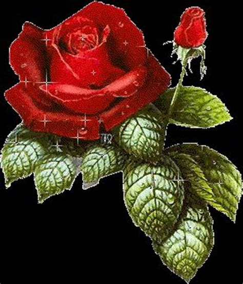 imagenes de rosas azules animadas gifs animales and red roses on pinterest