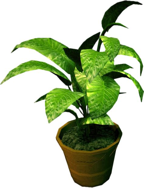small potted plants potted plants png www imgkid the image kid has it