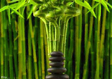 imagenes zen bambu pilar y sus complices bambu