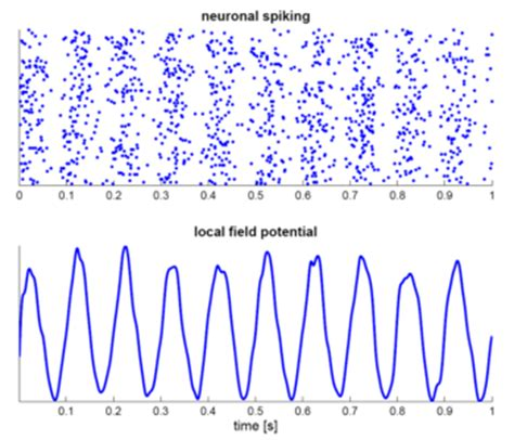 central pattern generator en español neural substrate of locomotor central pattern generators