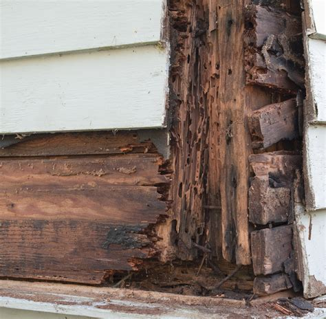 how to get rid of termites tips for protecting the house