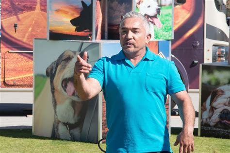 cesar millan s lessons from the pack stories of the dogs who changed my books whisperer cesar millan problems can be traced to