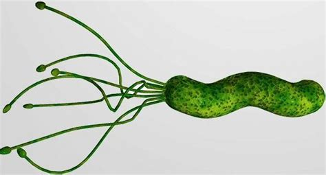 helicobacter pylori test helicobacter pylori tests and results microbeonline