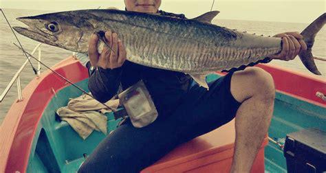 Umpan Mancing Dilaut umpan terbaik memancing di laut supaya tangkapan lebih