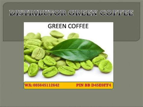 Green Coffee Asli wa 62 856 4511 2642 jual green coffee asli di semarang