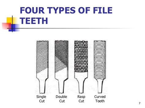 diagram of types of teeth diagram of four types of teeth image collections how to