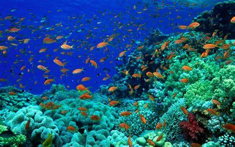 wallpaper animasi water ocean floor wallpapers wallpaper cave